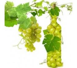 Бели винени (7)