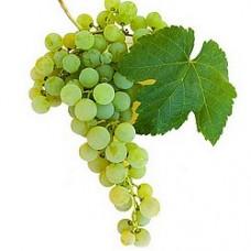 Бяло винено - Поморийски бисер
