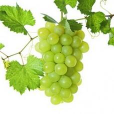 Бяло винено - Варненски мискет