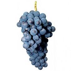 Червено винено - Сира
