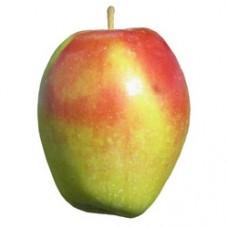 Ябълка - Синапка